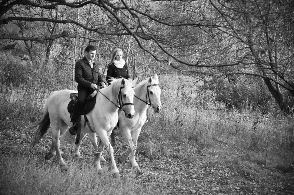 Заказать Конная прогулка на двух белых лошадях
