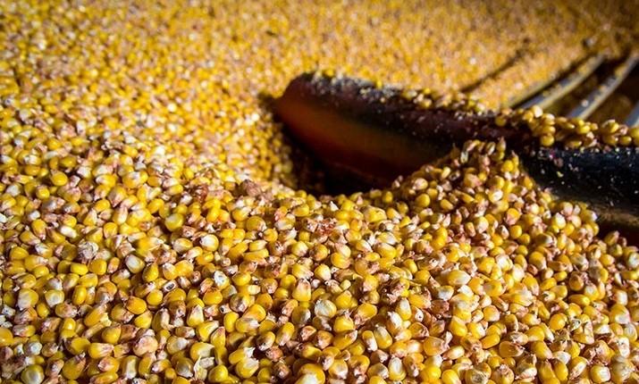 Сушка кукурузы, подсолничнека, сои