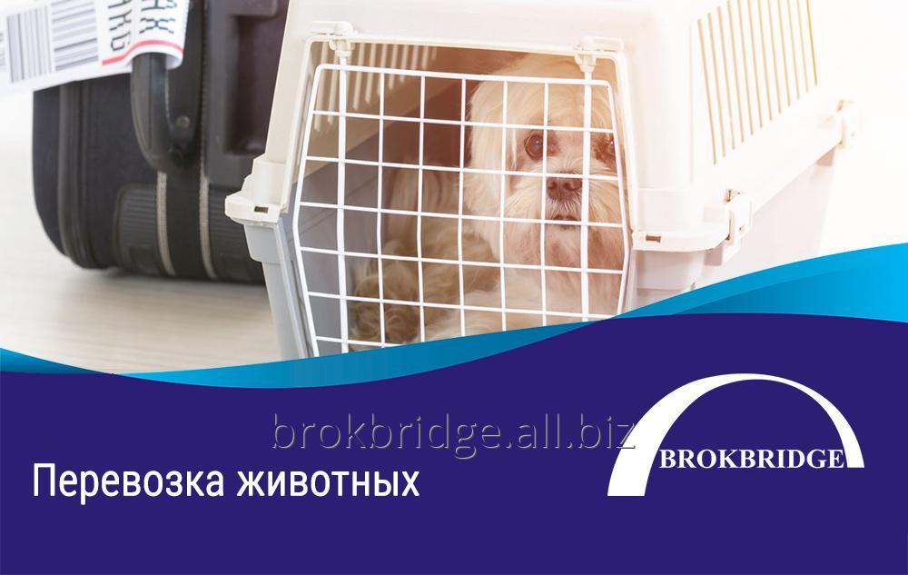 Заказать Перевозка животных. Авиа | Сертифицированный агент IATA