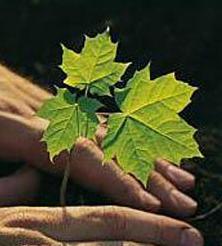 Заказать Химическая защита растений