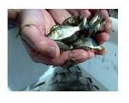 Заказать Воспроизводство рыбы и водных биоресурсов
