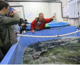 Заказать Разведение и выращивание пресноводной рыбы, рыбопосадочный материал