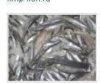 Хранение рыбной продукции