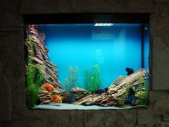 Оформление аквариумов, подбор совместимых видов