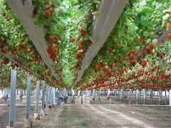Подбор оборудования под технологию выращивания цветов