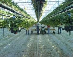 Подбор оборудования под технологию выращивания ягод
