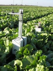 Technological support of projects on cultivation