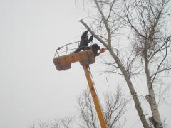 Cutting of trees, branches of any complexity