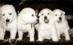 Разведение домашних животных в питомниках