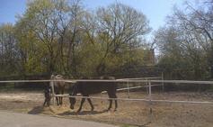 Hire of horses