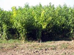Посадка деревьев-саженцев и кустарников