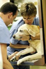 Консультации ветеринарные 067-730-57-37