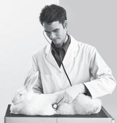Бактериологические ветеринарные исследования