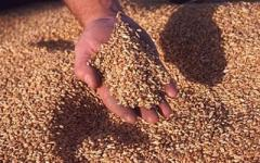 Экспорт зерна и зерновых культур