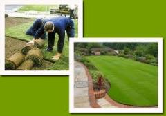 Gardening of lawns