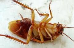 Уничтожение тараканов,  г. Никополь...