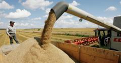 Закупка зерновых культур для переработки