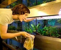 Уход за аквариумом, обслуживание аквариумов