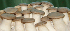 Delivery of fresh mushrooms to restaurants, cafe