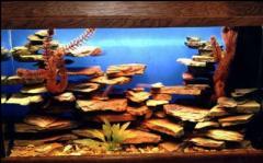 Услуги по обслуживанию аквариумов.