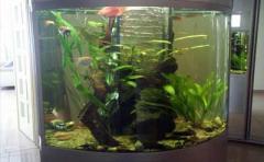 Обслуживание аквариумов.