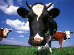 Осеменение коров и телок, Донецкая область