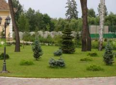 Комплексное озеленение территорий (проект, инсталляция, сервис)