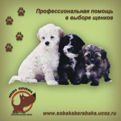 Помощь при выборе щенков