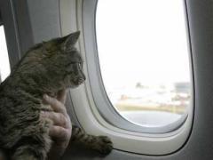 Оформлення документів на вивіз тварин