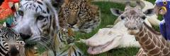 The order and delivery of exotic animals across