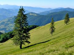 Green tourism in the Carpathians - cottages,