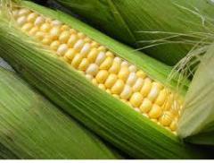 Уборка кукурузы, услуги по уборке кукурузы