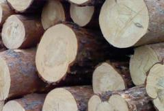 Purchase of timber from an ash-tree