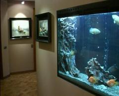 Полный спектр услуг связанных с аквариумом