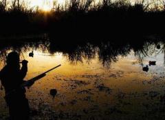 Организация охотничьих туров (Европа и Африка)