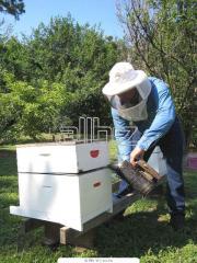 Индивидуальная селекция пчел с проверкой по