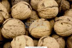 Закупка орехов оптом
