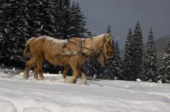Отдых на Новоый год в Закарпатье,  Карпратах,