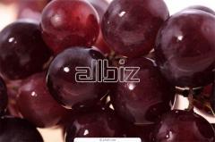 Хранение фруктов в холодильниках