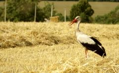 Tarım balıklar,hayvanlar ve kuşlar için karma