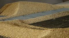 Закупка зерна гречихи и пшеницы продовольственной
