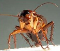 Extermination of cockroaches, bugs. Nikolaev.