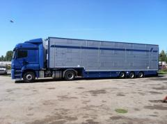 Transportations by the cattle truck