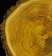 Куплю лес (сосна)