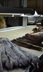 Processing of fur and fur raw materials