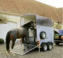 Перевозка и транспортировка лошадей международная