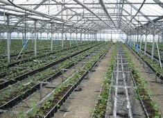 Installation of systems of automatic watering in