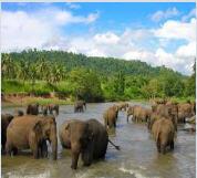 Шри - Ланка.Экскурсионные услуги