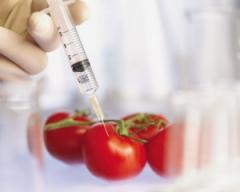 The analysis on the maintenance of GMO in products