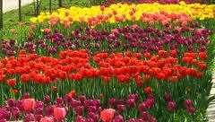 Уход за цветниками. Украина